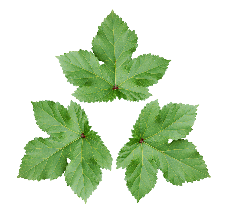 Großes Blatt Dekoration Tapete Green Leaf