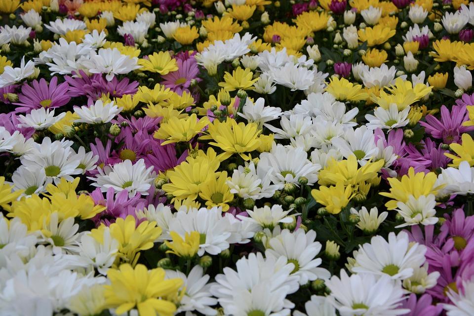 Blumen Weiße Gelb · Kostenloses Foto auf Pixabay