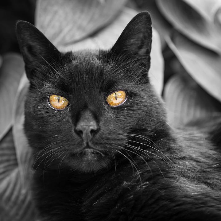 Mačička v šortky pics