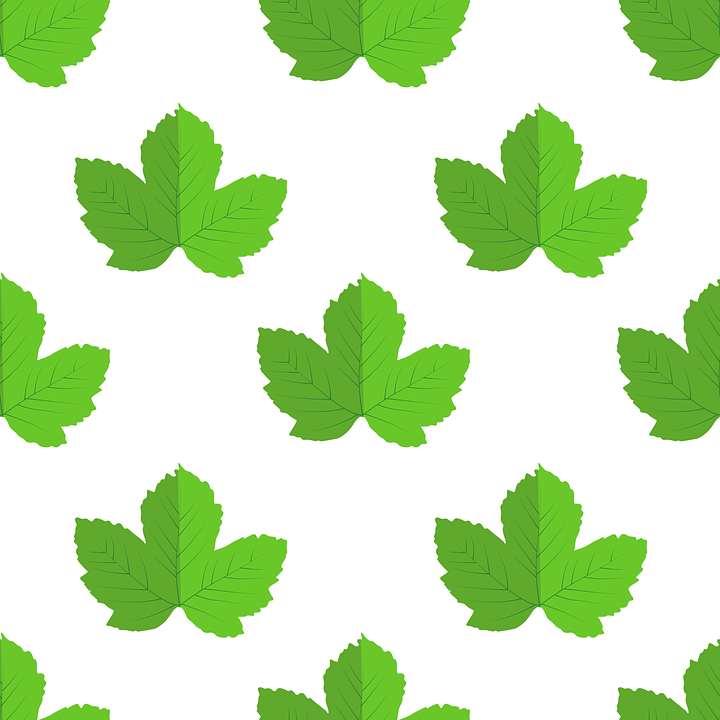 leaves vector nature free vector graphic on pixabay rh pixabay com victor leaves yuuri pregnant fanfiction vector leafs