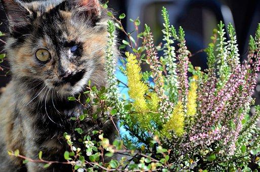 mokré čierne mačička zblízka pics