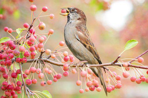 Bird, Autumn, Fall, Berries, Nature