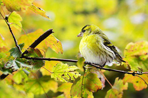 Bird, Yellow, Nature, Colorful, Branch
