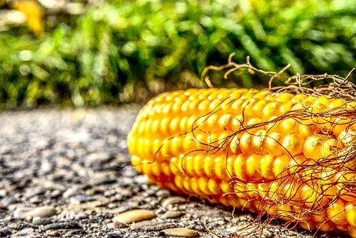 В Мордовии началась уборка кукурузы