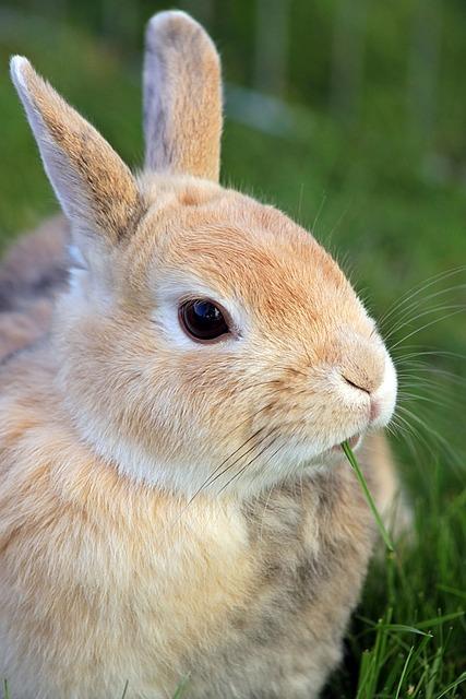 rabbit dwarf bunny  u00b7 free photo on pixabay