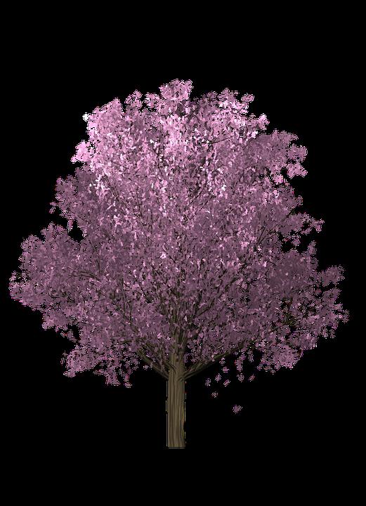 Free Illustration Tree Cherry Foliage Pink Free Image