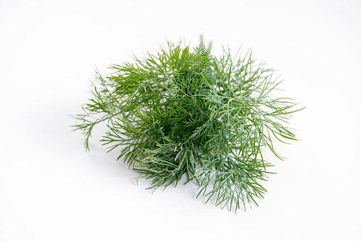 Dill, Spice, Plant, Food, Herb, Green