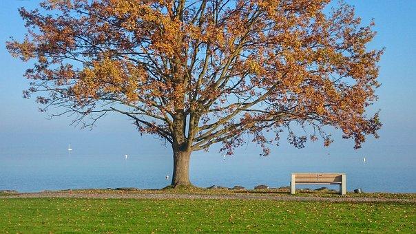 秋天, 树, 湖, 工作台, 公园, 阳光灿烂的日子, 路径, 风景, 十月