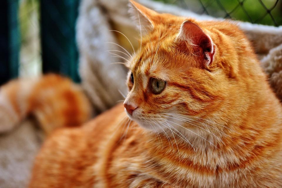 6a762335cb6e Γάτα Σκουμπρί Φωτογραφία - Δωρεάν φωτογραφία στο Pixabay