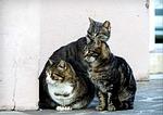 cat, cats, feline