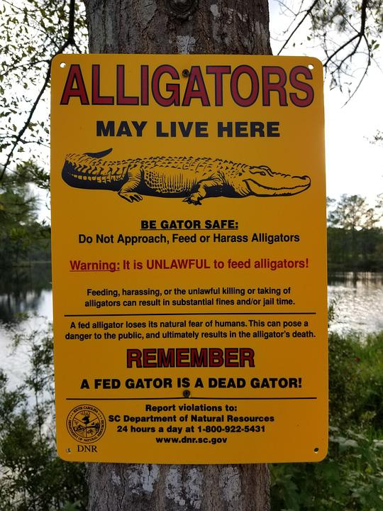 alligator sign warning free photo on pixabay