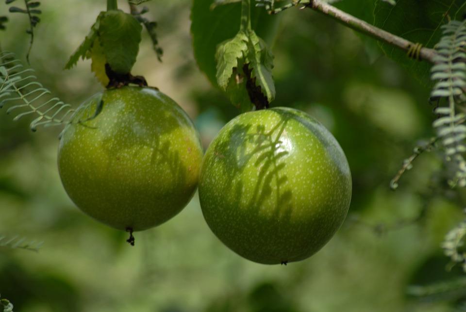 Fruta, Maracuyá, Planta, Montaña, Gro