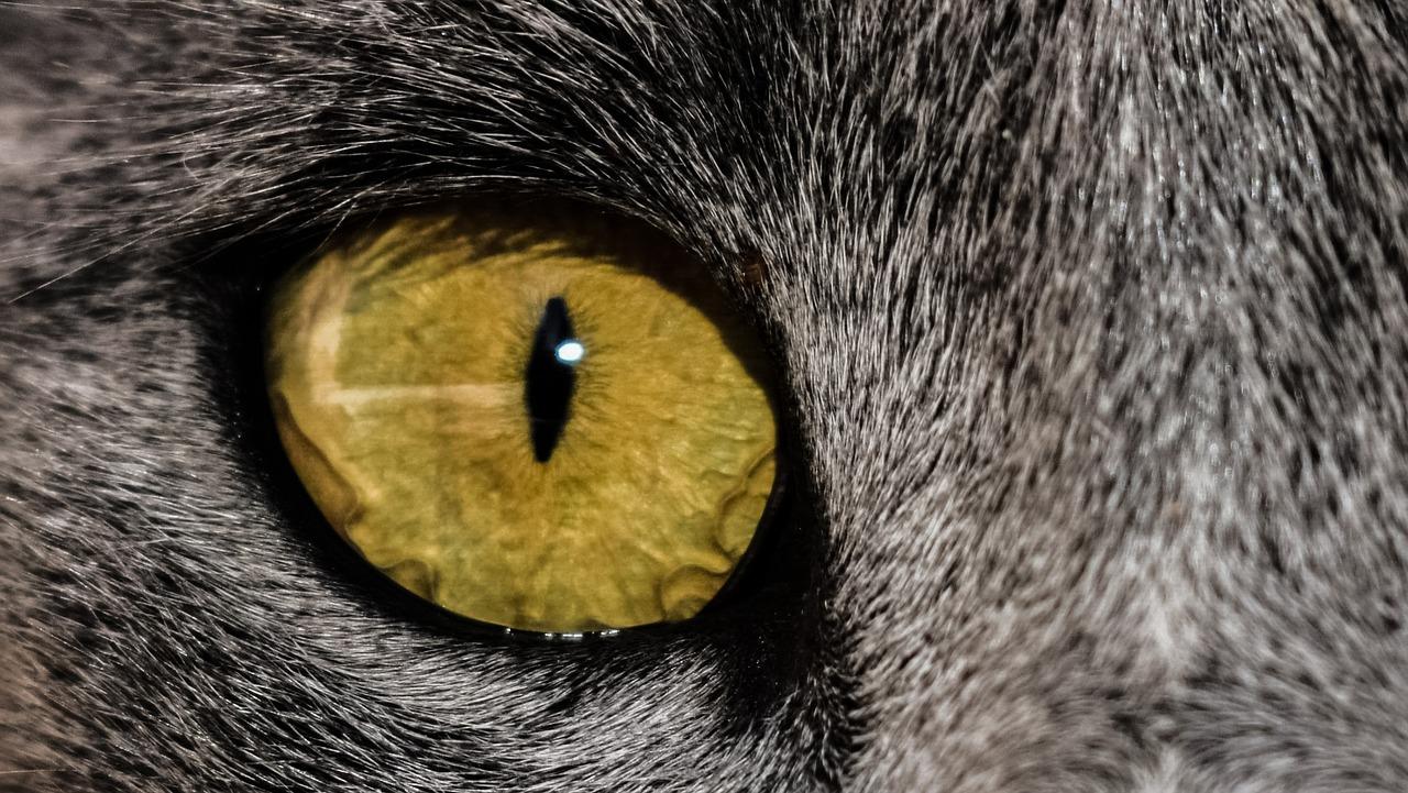 живая картинка глаз кошки спецназовцами все-таки