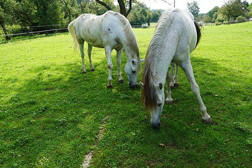 Horses, Eye, Monteaura, Equestrian