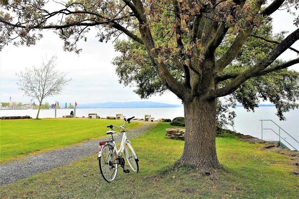 Strand, Baum, Herbst, Fahrrad, See Bodensee, Regen