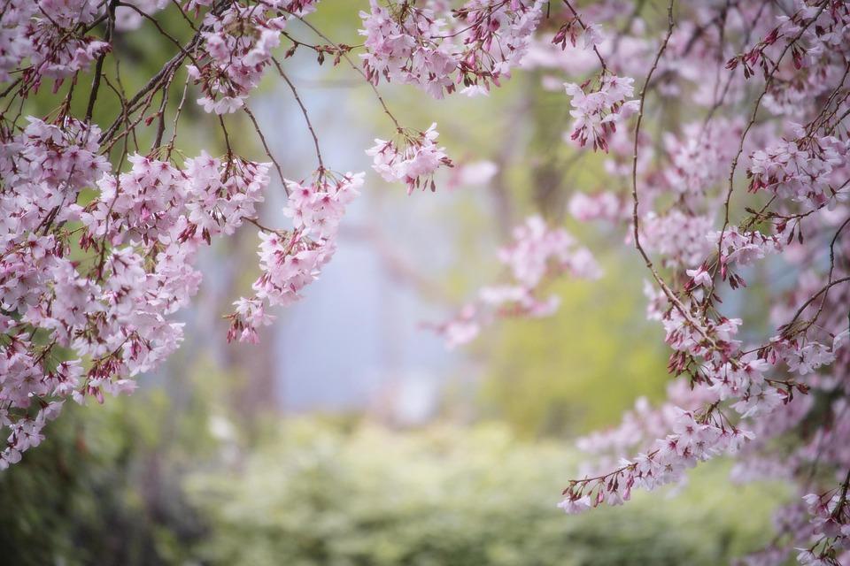 Japanese Garden Design Zen Landscapes