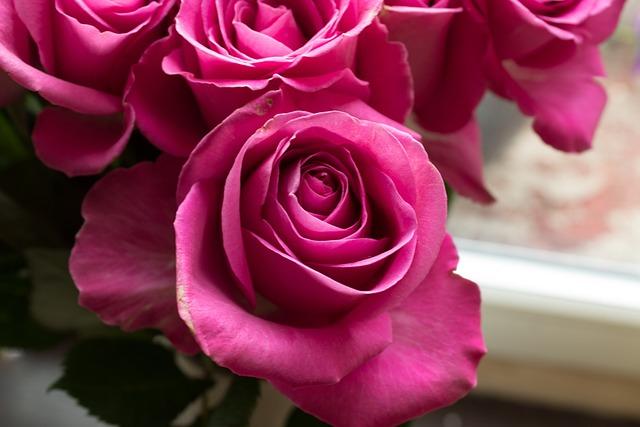 Pink Roses Flowers · Free Photo On Pixabay