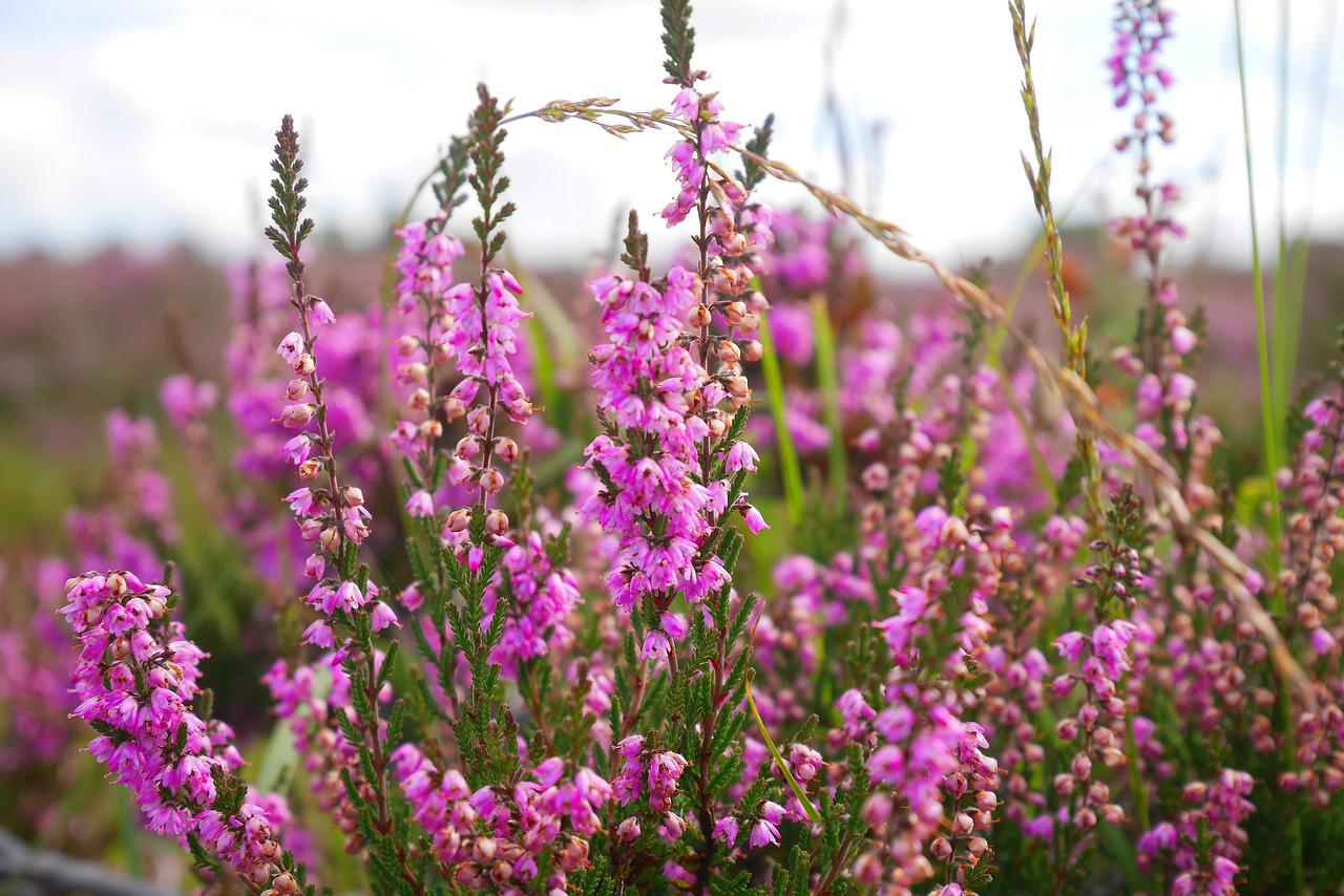 flower-2832900_1280.jpg