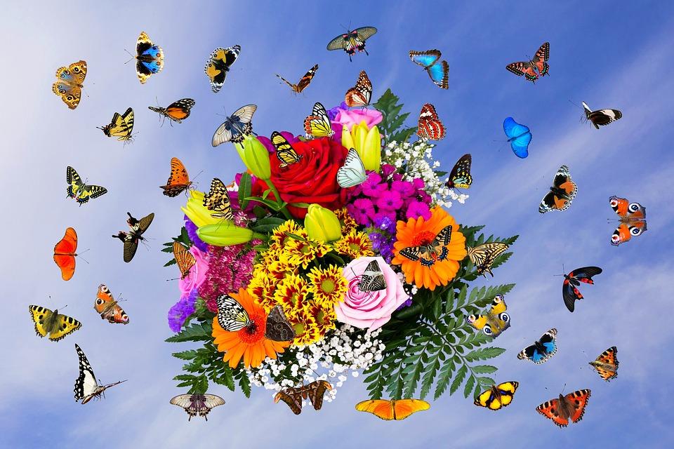 Emotionen Blumen Schmetterlinge Kostenloses Foto Auf Pixabay
