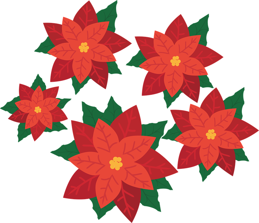 Poinsettia Flower Plant Free Vector Graphic On Pixabay