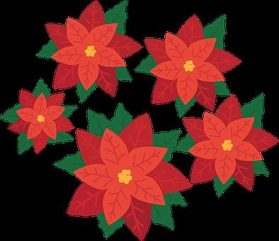weihnachtsstern kostenlose bilder auf pixabay. Black Bedroom Furniture Sets. Home Design Ideas