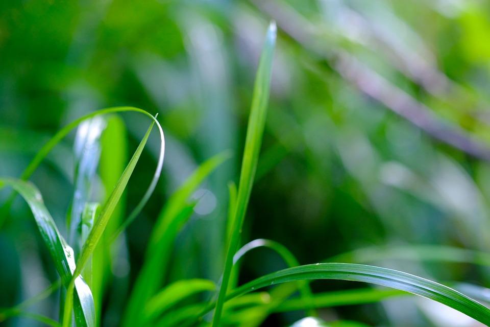 grass blade close up. Grass Blades Of Nature Grasses Meadow Green Blade Close Up R
