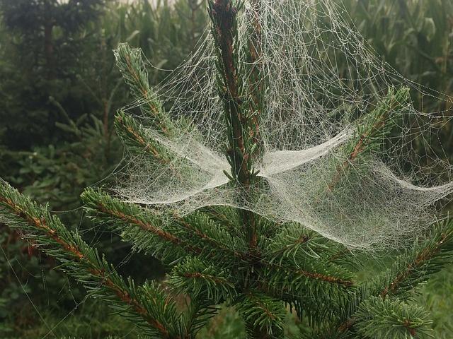 spider web christmas free photo on pixabay. Black Bedroom Furniture Sets. Home Design Ideas