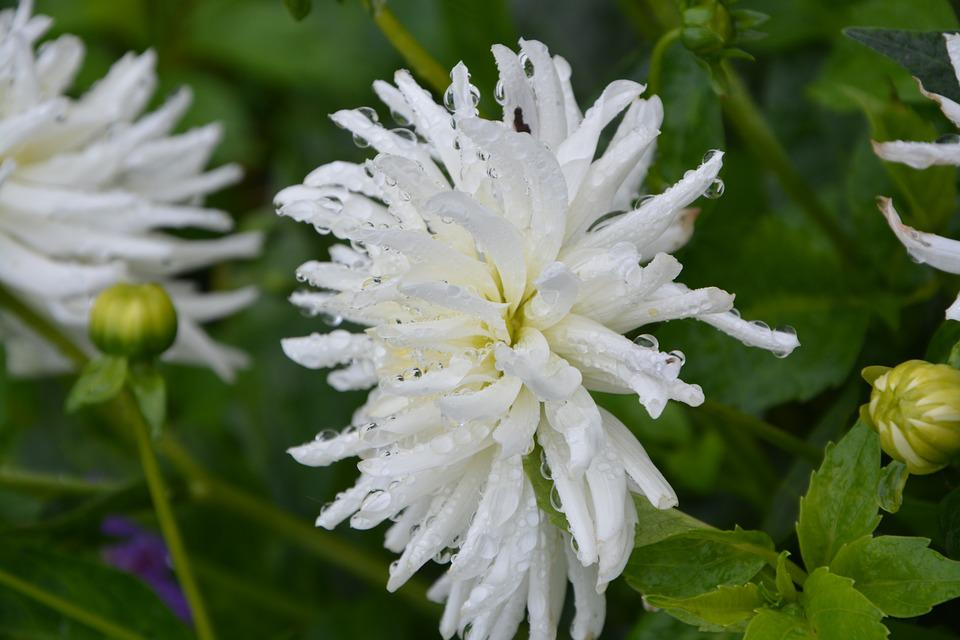 Weiße Blume Weißen Blütenblättern · Kostenloses Foto auf Pixabay