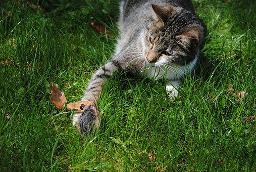 Cat, Mouse, Hunt, Attack, Prey, Predator
