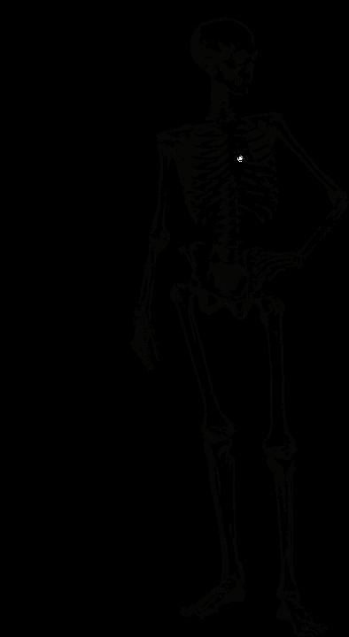 videnskab om knogler