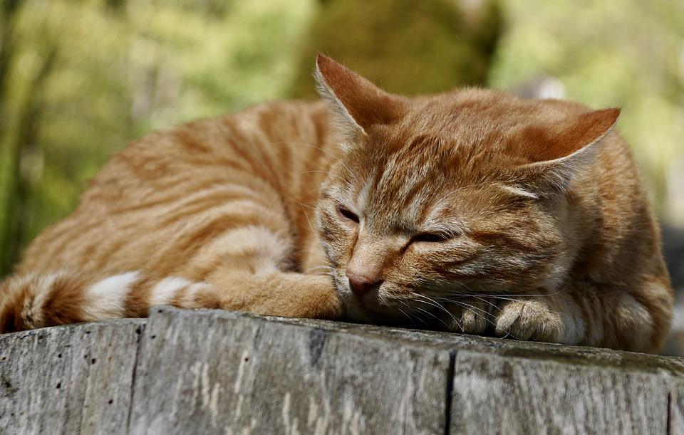 ecd9d8297778 Γάτα Ζώο Κατοικίδιο Κατοικίδια - Δωρεάν φωτογραφία στο Pixabay