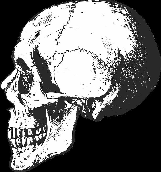 Skelett Schädel Knochen · Kostenlose Vektorgrafik auf Pixabay
