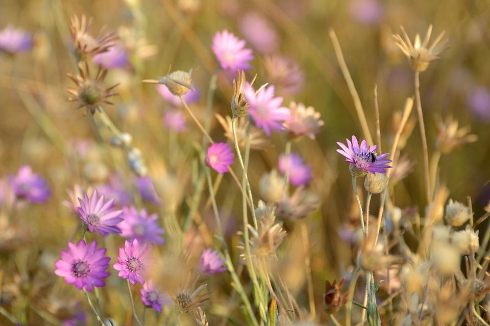 02b40f6c9699 Kvety Príroda Krásna - Fotografia zdarma na Pixabay