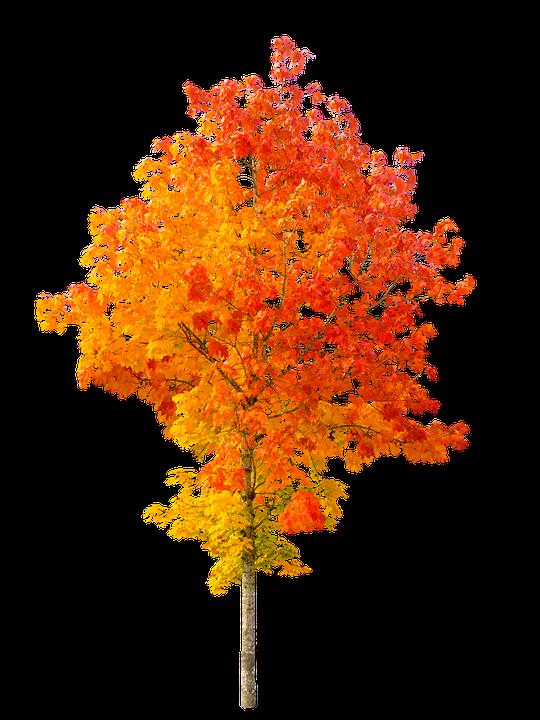 Free Photo Nature Autumn Tree Fall Foliage Free