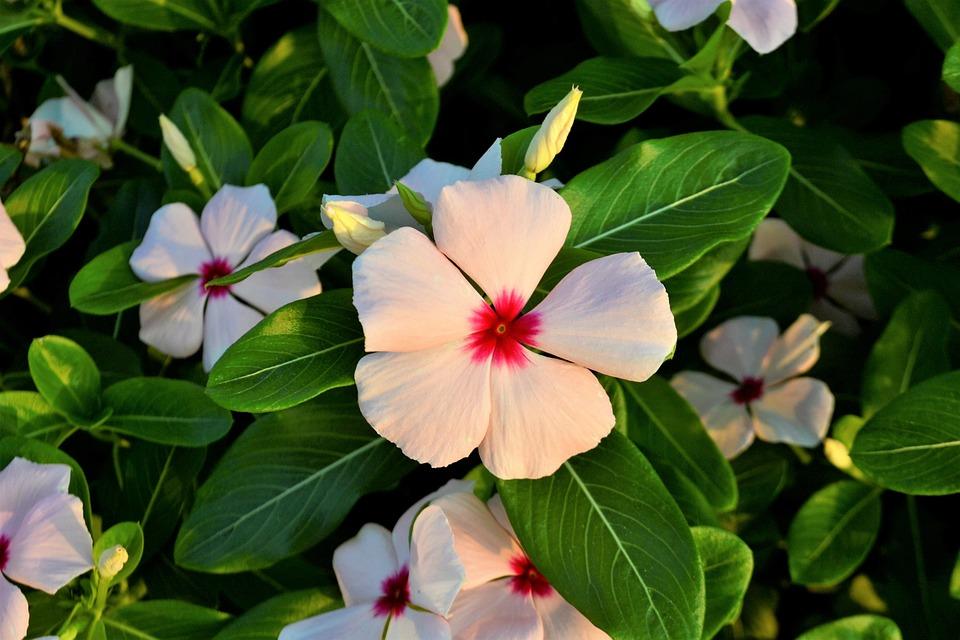 Flowers clover white flower free photo on pixabay flowers clover white flower red green leaves leaf mightylinksfo