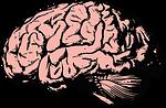 brain, think, knowledge