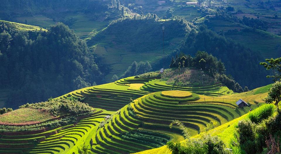 scenery silk terraces mu cang chai free photo on pixabay