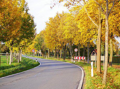 Autumn Country Road, Avenue, Fall Color