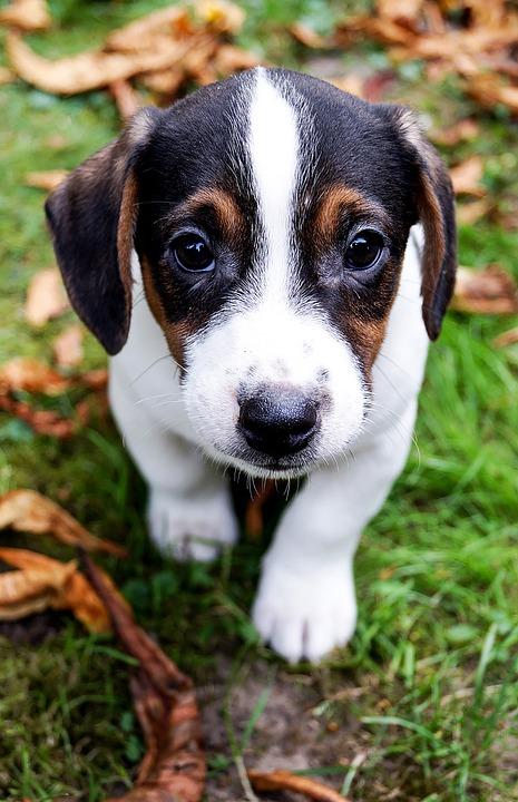 sød lille hund