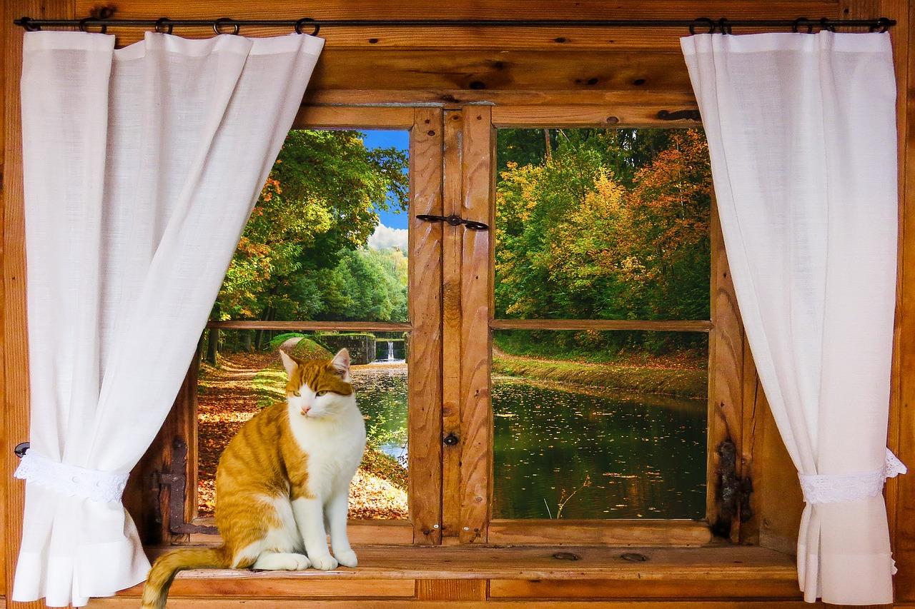 картинки красивые окна с занавесками собачка развивается физически