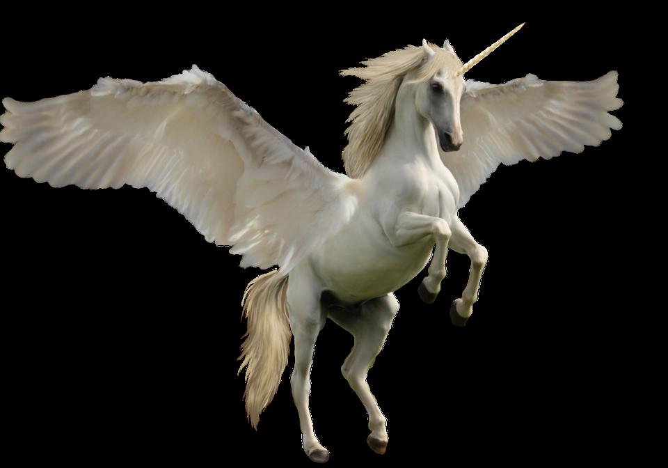 Unicorn Fantasy Horse Free photo