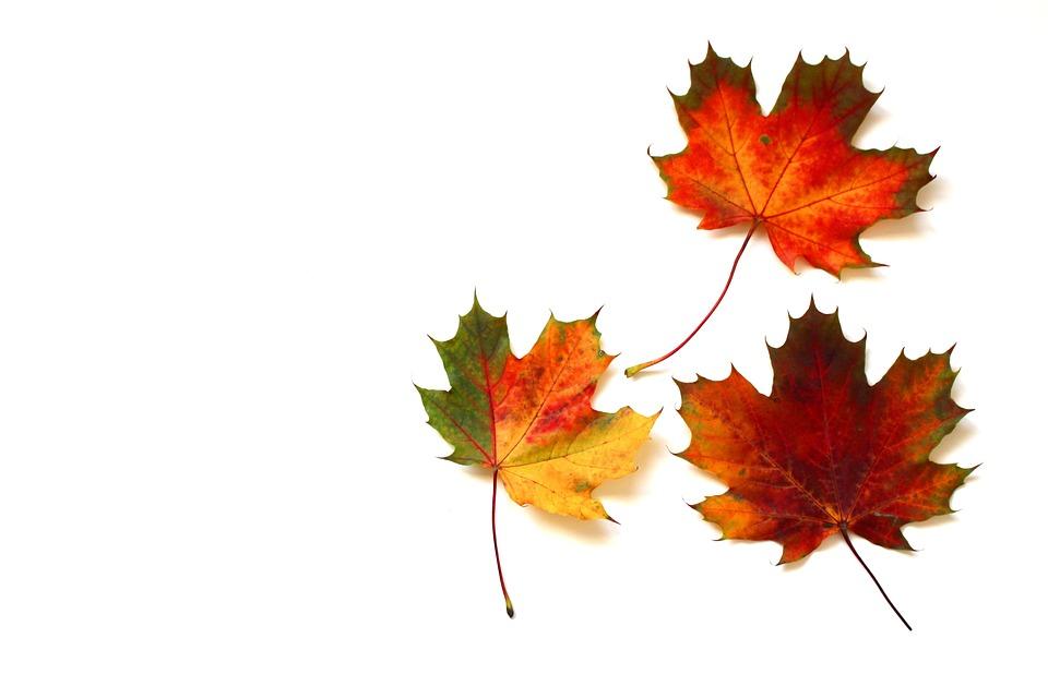 Blätter Herbst Herbstlaub · Kostenloses Foto auf Pixabay