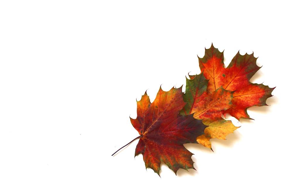 Blatter Herbst Herbstlaub Kostenloses Foto Auf Pixabay