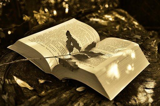 Livre, Lecture, Livre Ouvert