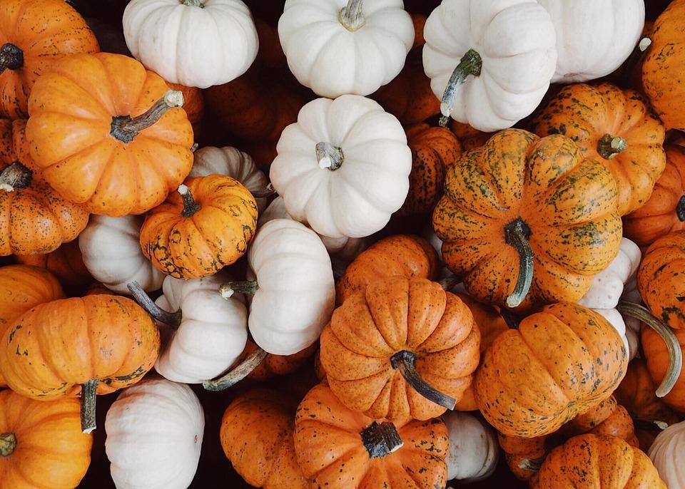 Græskar, Falde, Efterår, Høst, Oktober, Baggrund