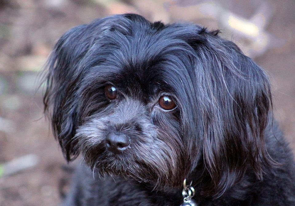 13+ Anjing hitam terbaru