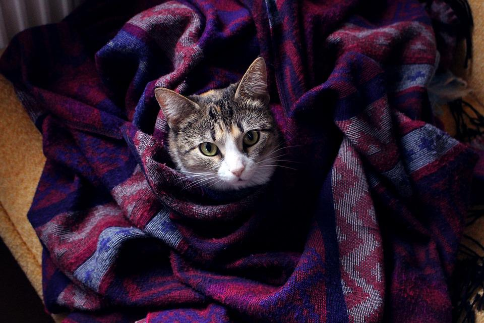 Cat, Pet, Snout, Plaid, Quilt, Style, Fluffy Cat, Cats