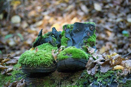 Scarpe, Muschio, Forest, Vecchio