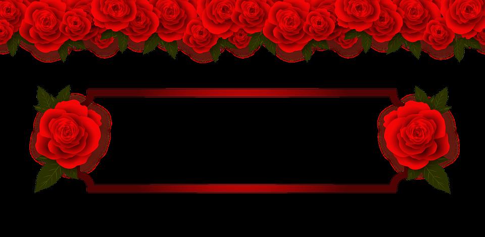 Rose Gambar Bunga Red Com