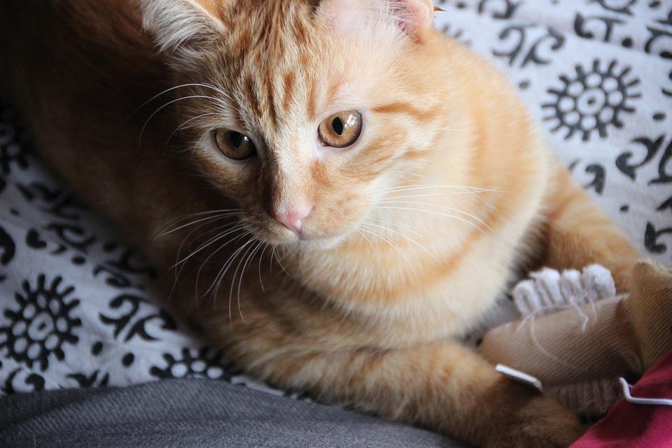 Kac Kot Pet Darmowe Zdjęcie Na Pixabay